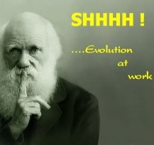 evolution at work